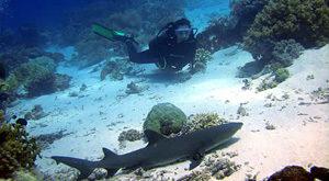zona de inmersion moalboal tiburon