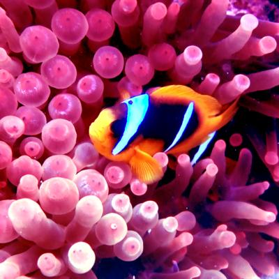 zona de inmersion ruta norte y safaga arrecife